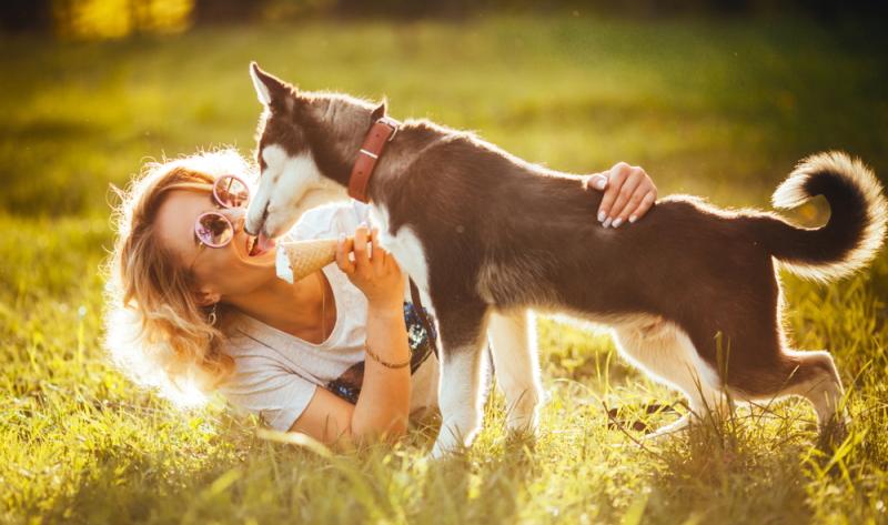 Damit auch die Vierbeiner im Sommer eine schöne Abkühlung genießen können, bietet sich das Hundeeis gerade zu an. (Foto: Shutterstock - style-photo)