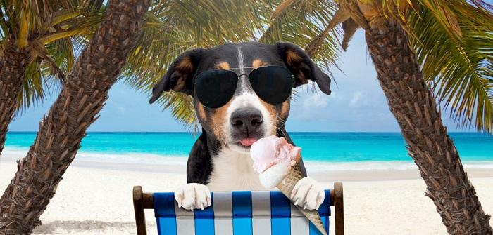 Dürfen Hunde Eis essen: Welche Ernährung bekommt Hunden im Sommer? (Foto: Shutterstock- Vincent Scherer )
