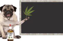 CBD Öl für Hunde zur Beruhigung? Auf die Dosierung kommt es an ( Foto: Shutterstock-Monica Click )