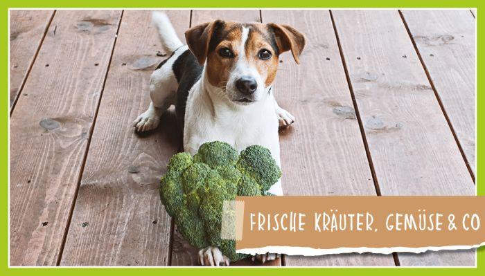 Frische Kräuter, Gemüse & Co.