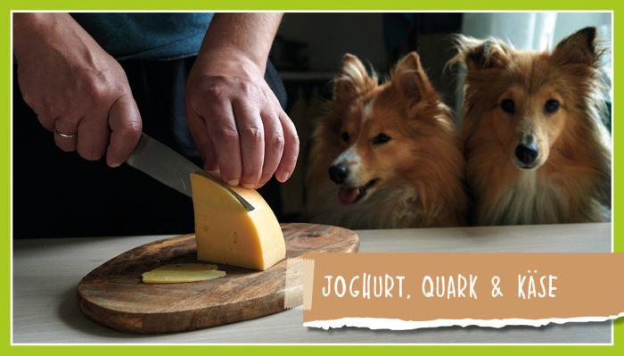 Joghurt, Quark & Käse