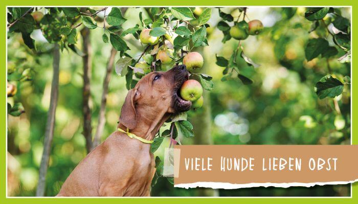Viele Hunde lieben Obst