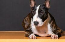 Listenhunde: hier haben sie es am schwersten (Foto: shutterstock - JavierMartinRuiz)