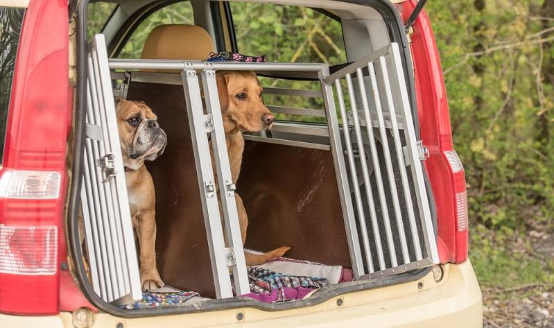 Am sichersten ist der Hund laut ADAC in einer Transportbox zu transportieren. ( Foto: Shutterstock-thka)
