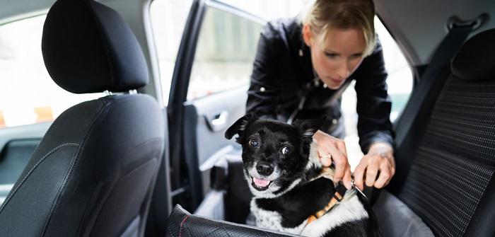 Hund im Auto transportieren: So muss ich Hund und Katze im Auto sichern (Foto: Shutterstock- Andrey_Popov )