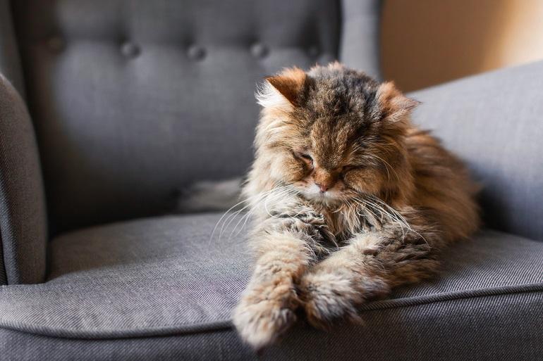 So wie die Sinne beim Menschen im Alter nachlassen, kann auch eine Katze nicht mehr gut sehen, hören, riechen und schmecken. (Foto: shutterstock.com / Danielle Armstrong)
