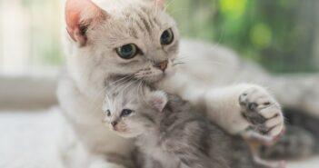 Lebenserwartung einer Hauskatze: Wie alt werden Katzen wirklich? (Foto: shutterstock.com / ANURAK PONGPATIMET)