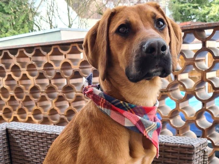 Welpen richtig füttern: Unser Junghund Fay testet Schonkost von Reico.