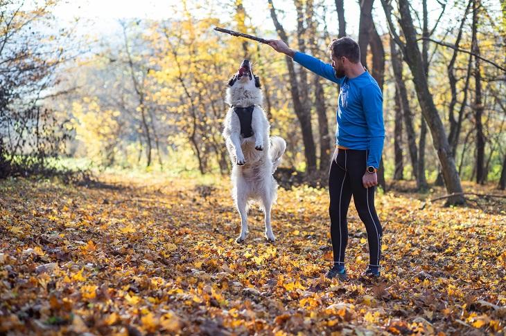 In den Wäldern haben Besitzer und Vierbeiner viel Spaß zusammen. (Foto: shutterstock.com / Melinda Nagy)