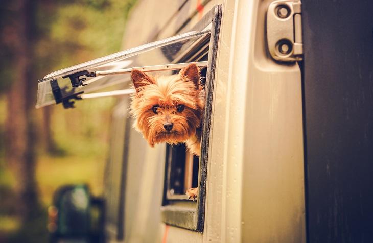Campingplätze sind ebenfalls ein tolles Reiseziel mit dem Hund. (Foto: shutterstock.com / Virrage Images)