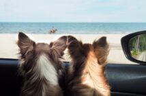 Ferienhaus mit Hund: Hier sind Familien mit Haustieren willkommen (Foto: shutterstock.com / ketteimages)