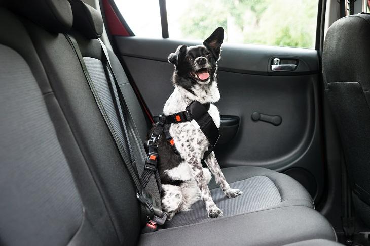 Die Fahrt im Auto ist für den Vierbeiner die angenehmste Art zu Reisen. (Foto: shutterstock.com / Andrey_Popov)