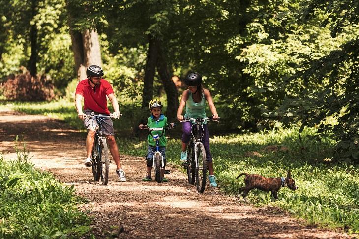 Mit der Familie im Wald kann sich der Vierbeiner richtig auspowern. (Foto: shutterstock.com / Microgen)