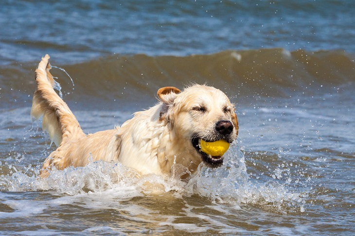 Hundestrände sind das Highlight schlechthin für den Vierbeiner. (Foto: shutterstock.com / Phil Stev)