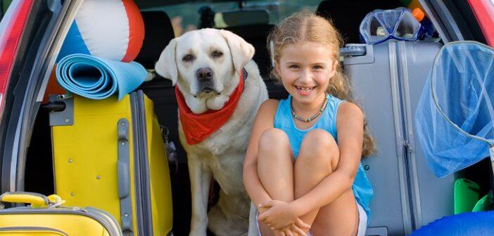 Hundeurlaub: So wird die Reise zu einem unvergesslichen Erlebnis (Foto: shutterstock.com / gorillaimages)