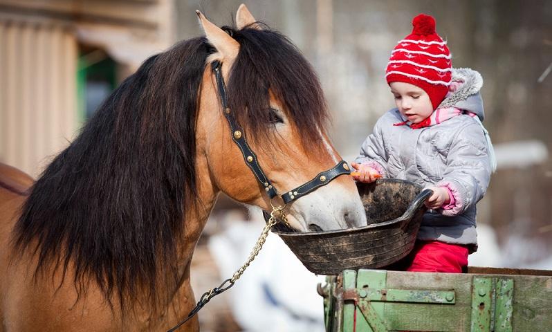 Auch kleine Kinder haben Spaß daran ein Pferd zu füttern. (Bildnachweis: Shutterstock- Alexia Khruscheva)