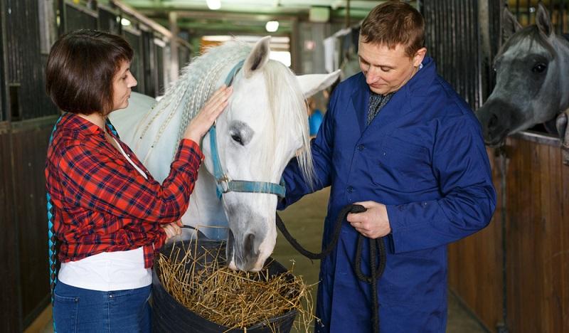 Das richtige Futter ist für die Gesundheit des Pferdes sehr wichtig. (Foto: Shutterstock- Iakov Filimonov )