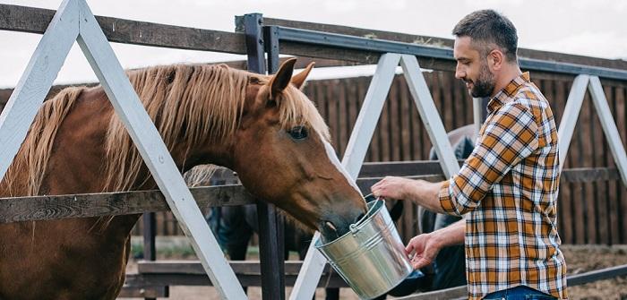 Pferdenarren: Gutes Futter ist das A und O für Gesundheit und Leistungsfähigkeit ( Foto: Shutterstock- LightField Studios )