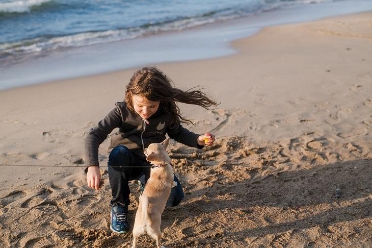 Urlaub an mit dem Hund an der Nordsee ist nicht nur für den Vierbeiner ein tolles Erlebnis. (Foto: shutterstock.com / Maria Simonova)