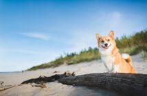 Urlaub mit Hunden: Abwechslungsreiche Urlaubsziele in Deutschland (Foto: shutterstock.com / Jus_Ol)