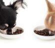Gutes Trockenfutter für den Hund: Worauf kommt es an? (Foto: shu8tterstock.com / MaxStrogiy)