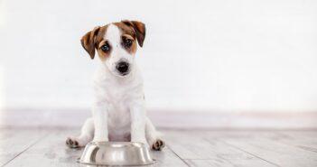 Hundefutter: Kaltgepresst für hohe Qualität? (Foto: shutterstock.com / Gladskikh Tatiana)